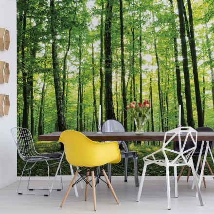 Non-woven wallpaper mural Summer forest